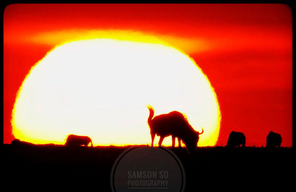 大草原的日落